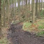 zaneradeny les