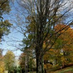 IMG_8523_panorama