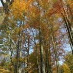 IMG_8541_panorama