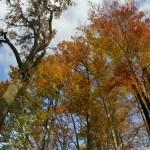 IMG_8543_panorama