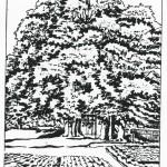 Kaple a lípy. Kresba Karl Winter, 15. 7. 1945